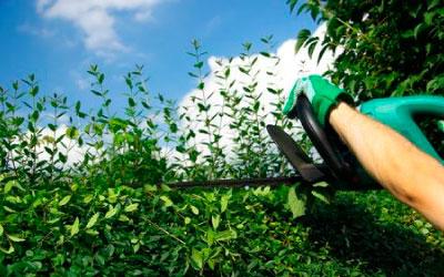 podas de arboles y zonas verdes en Huelva